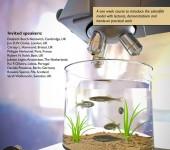 Poster för doktorandkurs – tema zebrafisk