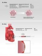 Regenerativ medicin – hjärtceller