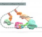 Transkriptionskomplex – DNA