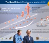 Nobelpriset i fysiologi eller medicin 2012 – poster