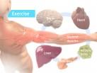 Slide för presentation – Muskler och motion