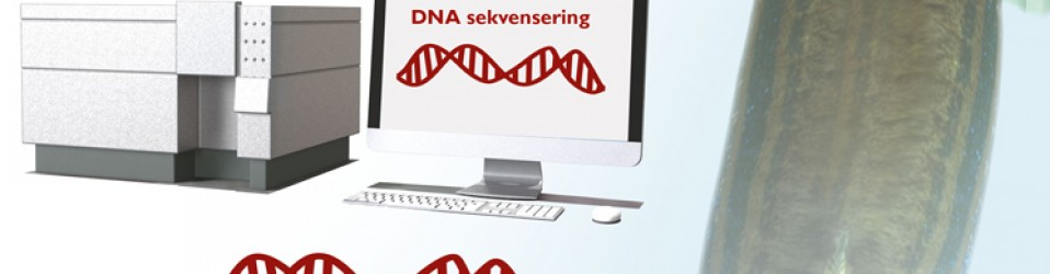 DNA-analys – zebrafisk