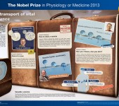 Nobelpriset i fysiologi eller medicin 2013 – poster