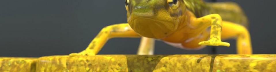 Salamander 3D