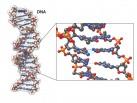 DNA molecule in 3D