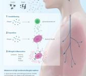 Allergy – immune reaction