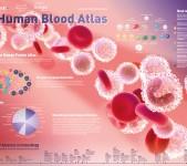 The Human Blood Atlas