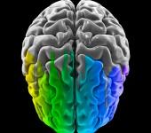 Human brain – rainbow colored