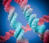 DNA 3D