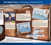 The Nobel Prize in Physiology or Medicine 2013