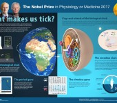 The Nobel Prize in Physiology or Medicine 2017