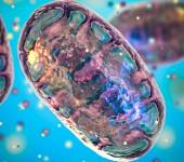 Mitochondria 3D