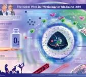 Nobel Prize in Physiology or Medicine 2019