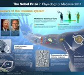 Nobelpriset i fysiologi eller medicin 2011 – poster